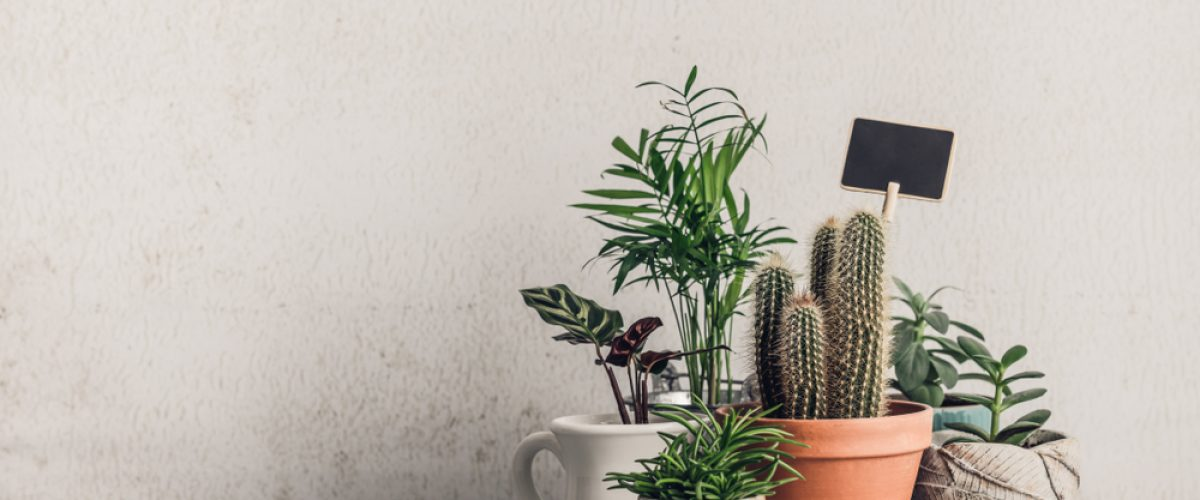 Collection,Of,Various,Cactus,And,Succulent,Plants,In,Different,Pots.